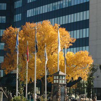 Powning Veterans Memorial Park, downtown Reno, Nevada