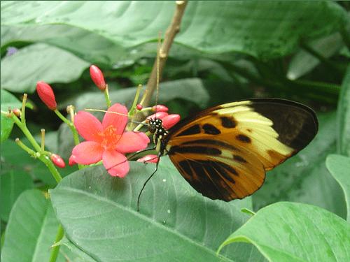 Buttefly Pavilion