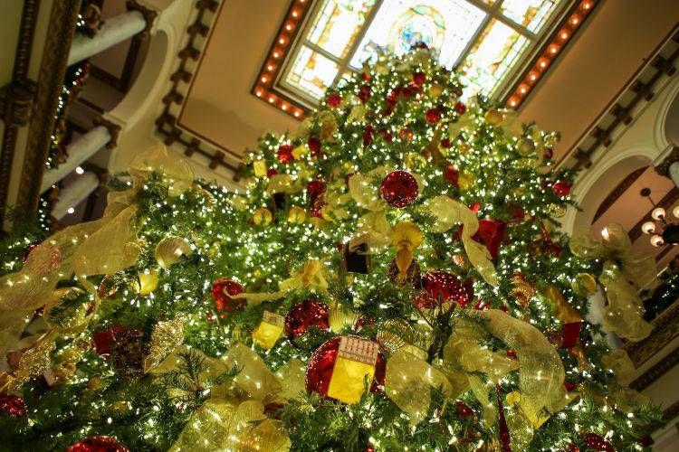Tree at the Capital Hotel