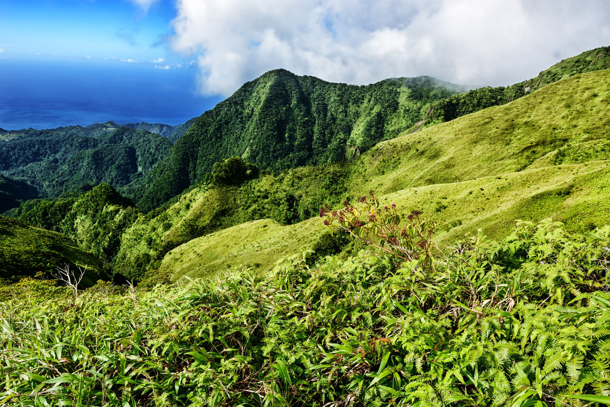 Where to Find the Best Hiking in Martinique
