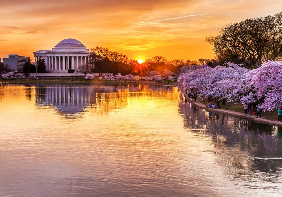 The Cherry Blossom Festival in Washington, D.C.