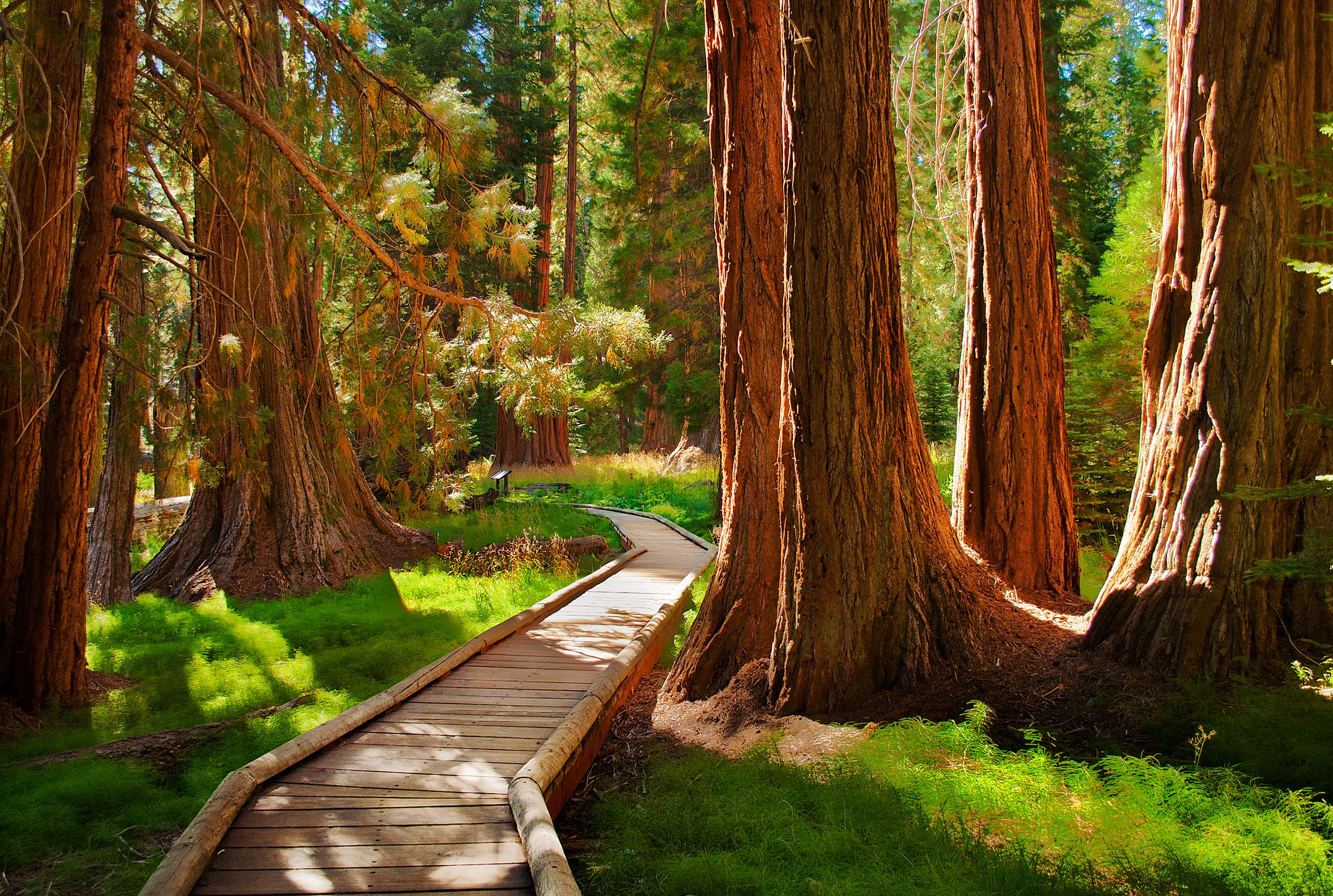 Parque Nacional Sequoia, California