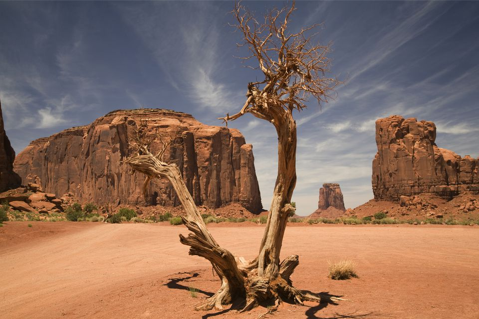 Blasted tree in Monument Valley, USA