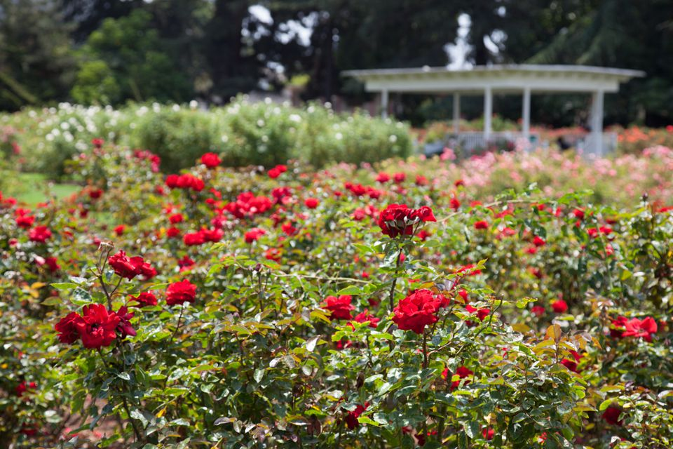Visiting Exposition Park Rose Garden in Los Angeles