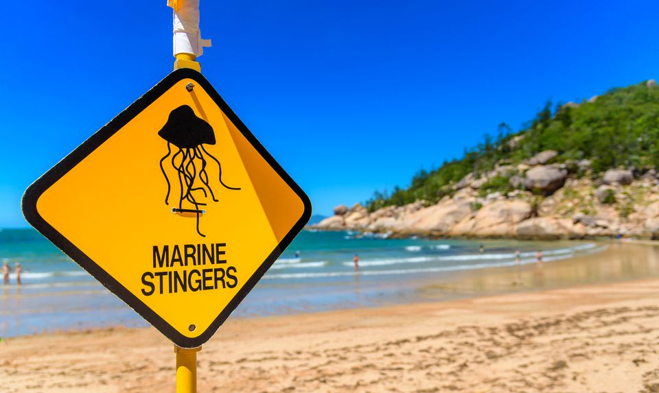 A sign on the beach to warn swimers of jellyfish in the water