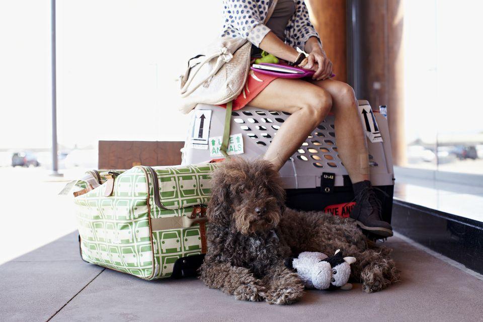 Mujer esperando en el aeropuerto con perro y bolsas