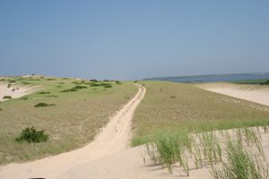 See Cape Cod Sand Dunes with Art's Dune Tours