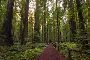 Trail in Redwood National park