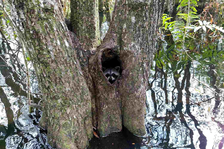 Secret Woods Nature Center florida