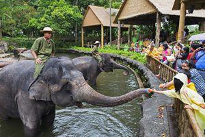 Elephants at Singapore Zoo