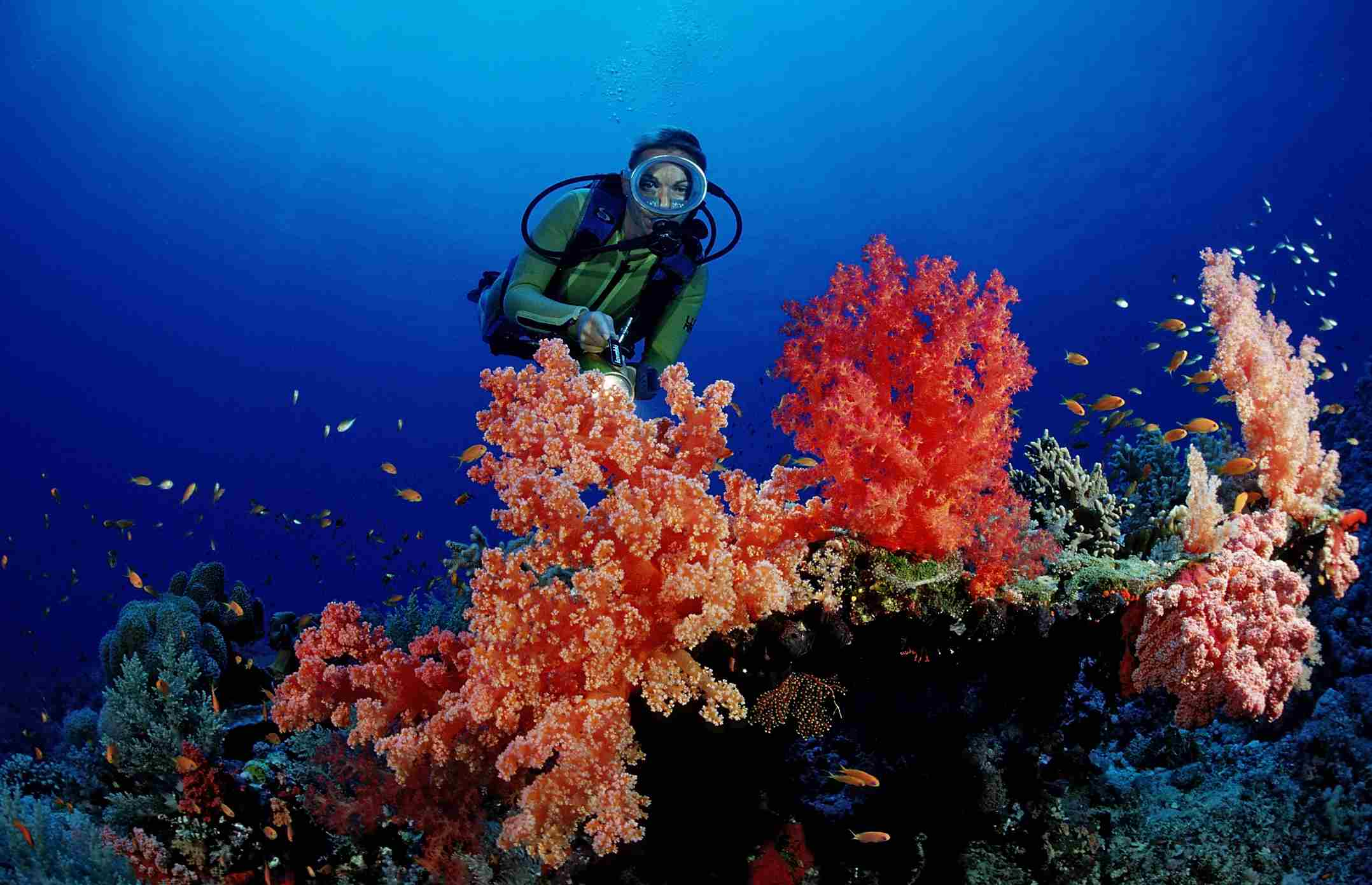 The Best Places in the World to Go Scuba Diving