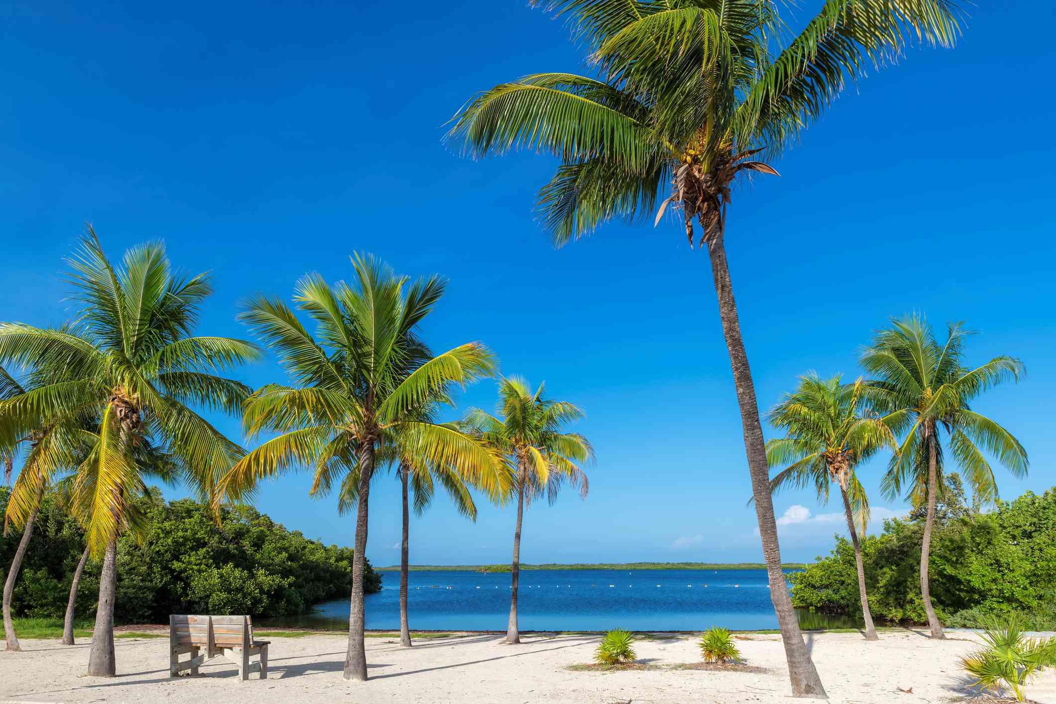 Palmas de coco en Sunny Beach y mar Caribe