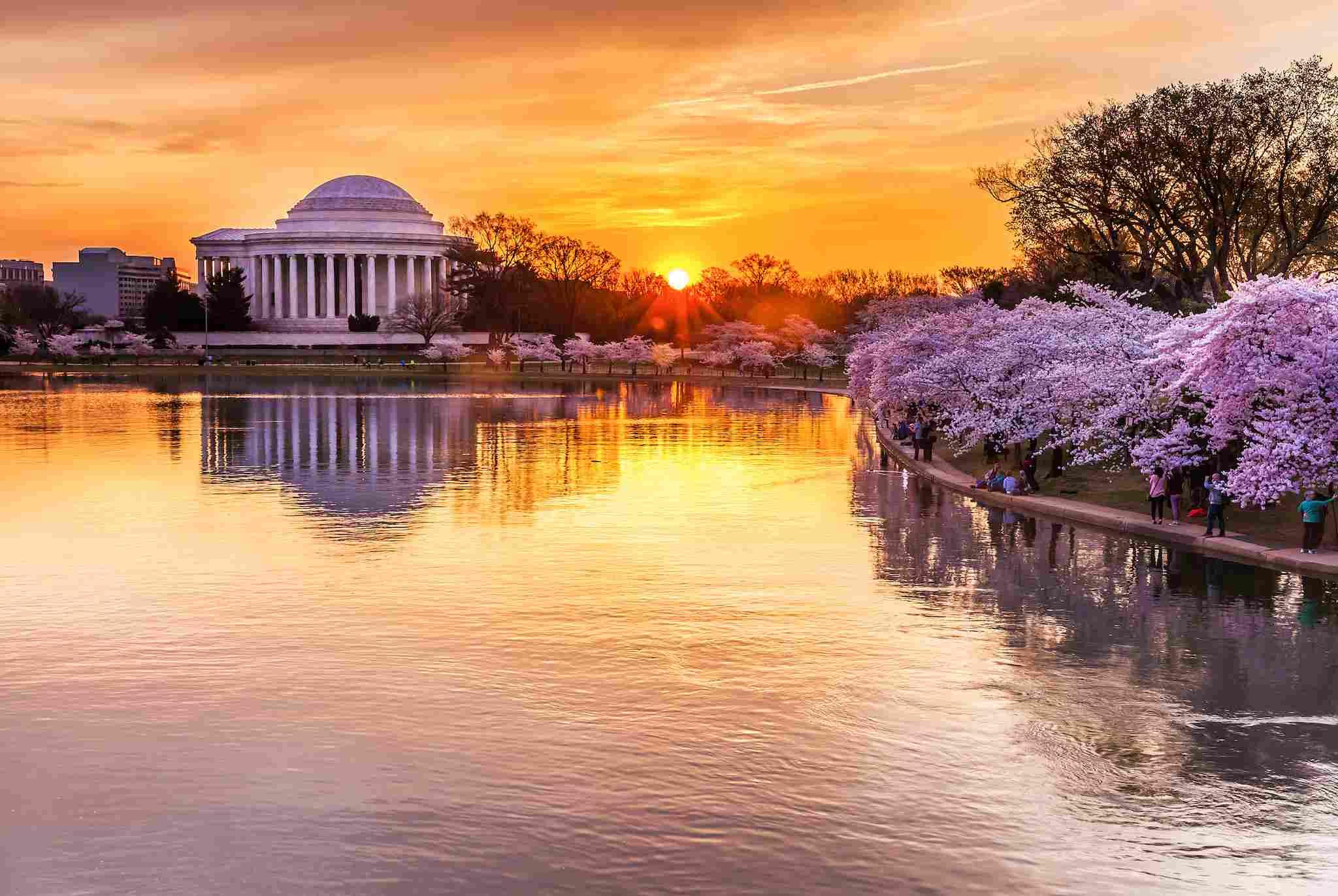Flores de cerezo a lo largo de la Cuenca Tidal en Washington, DC