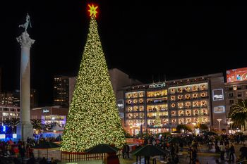 San Francisco's Best Christmas Trees and Holiday Lights