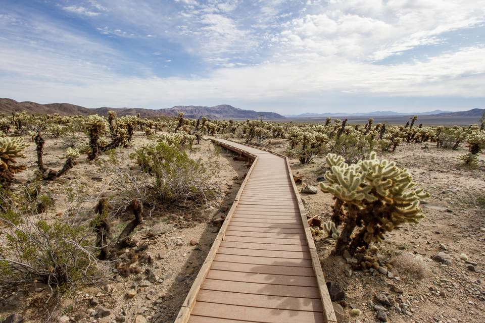 Wooden walkway through a cactus garden in Joshua Tree