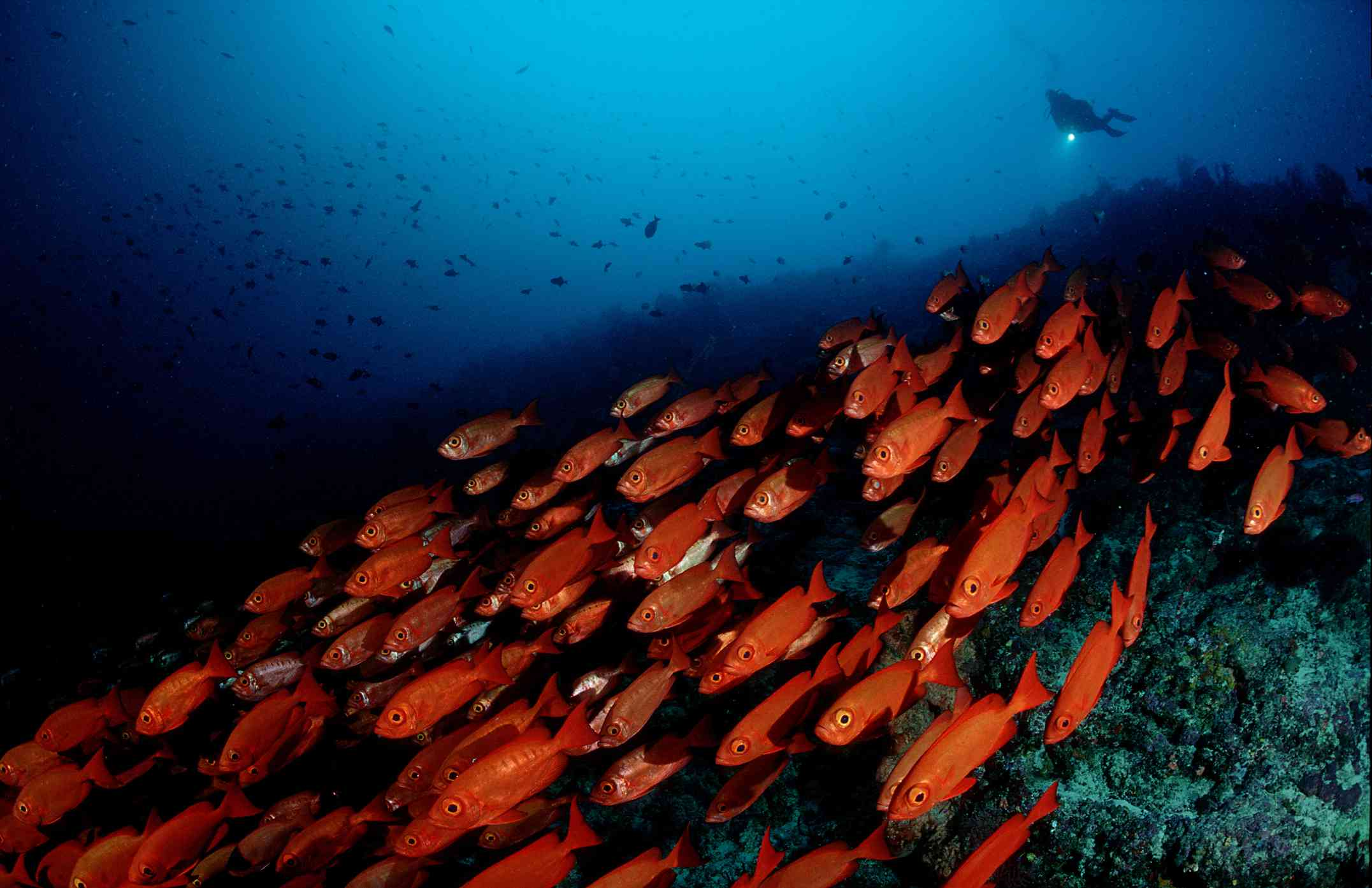 8 of the Best Scuba Diving Destinations in Africa