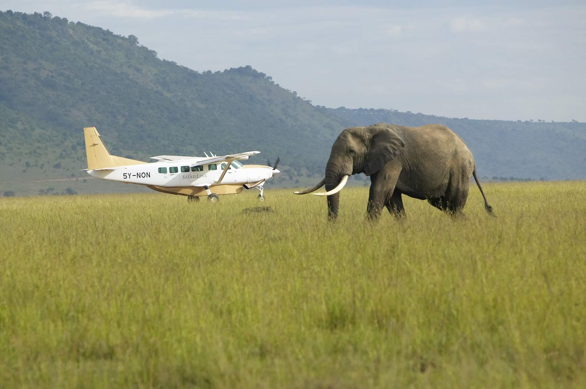 Elephant with airplane, Kenya