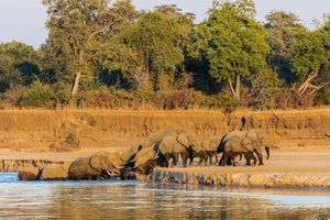 South Luangwa National Park, Zambia: The Complete Guide