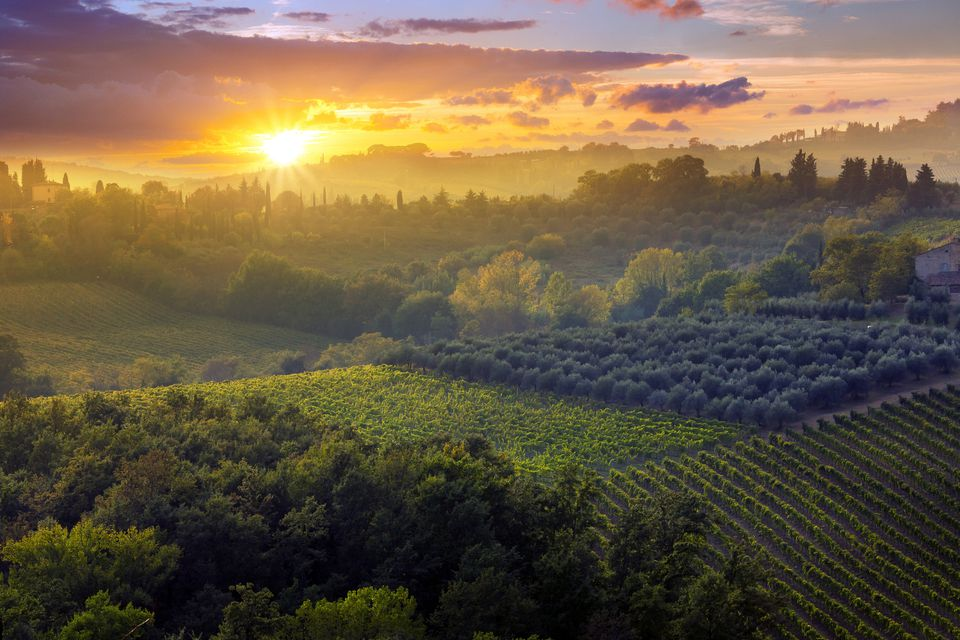 Sunset over a vineyard in Tuscany