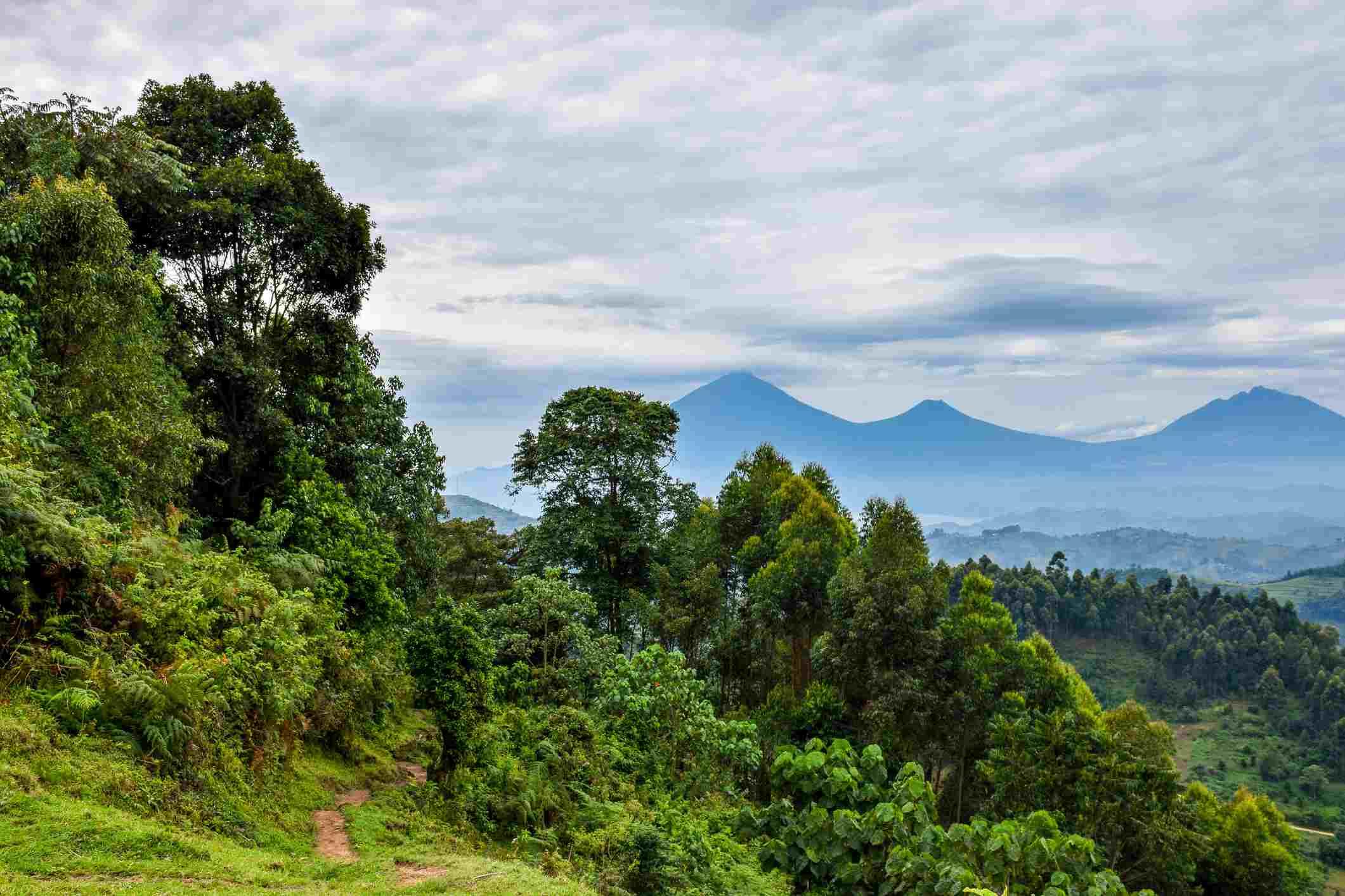 one of the highest peaks in Bwindi National Park in Uganda, looking toward the Virunga Mountains in Rwanda.