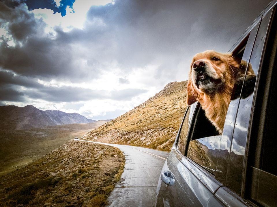Dog vacation in Colorado