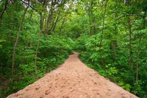 Trails at Indiana Dunes National Park