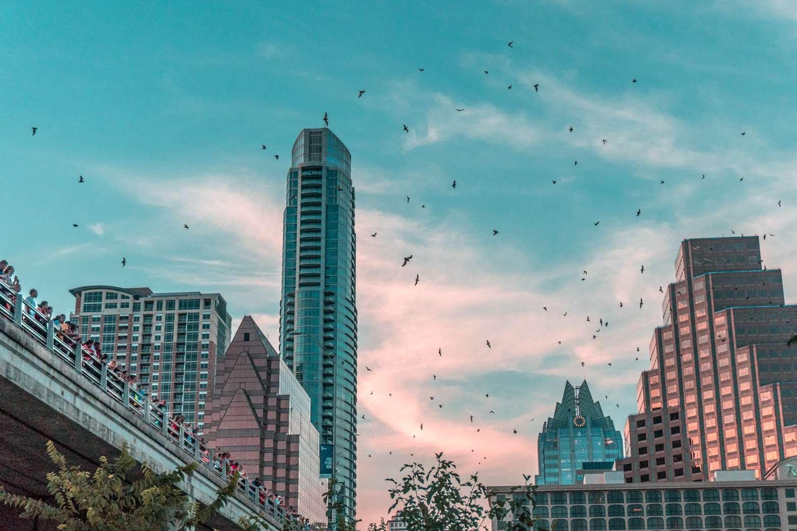 Murciélagos volando alrededor del famoso puente en Austin