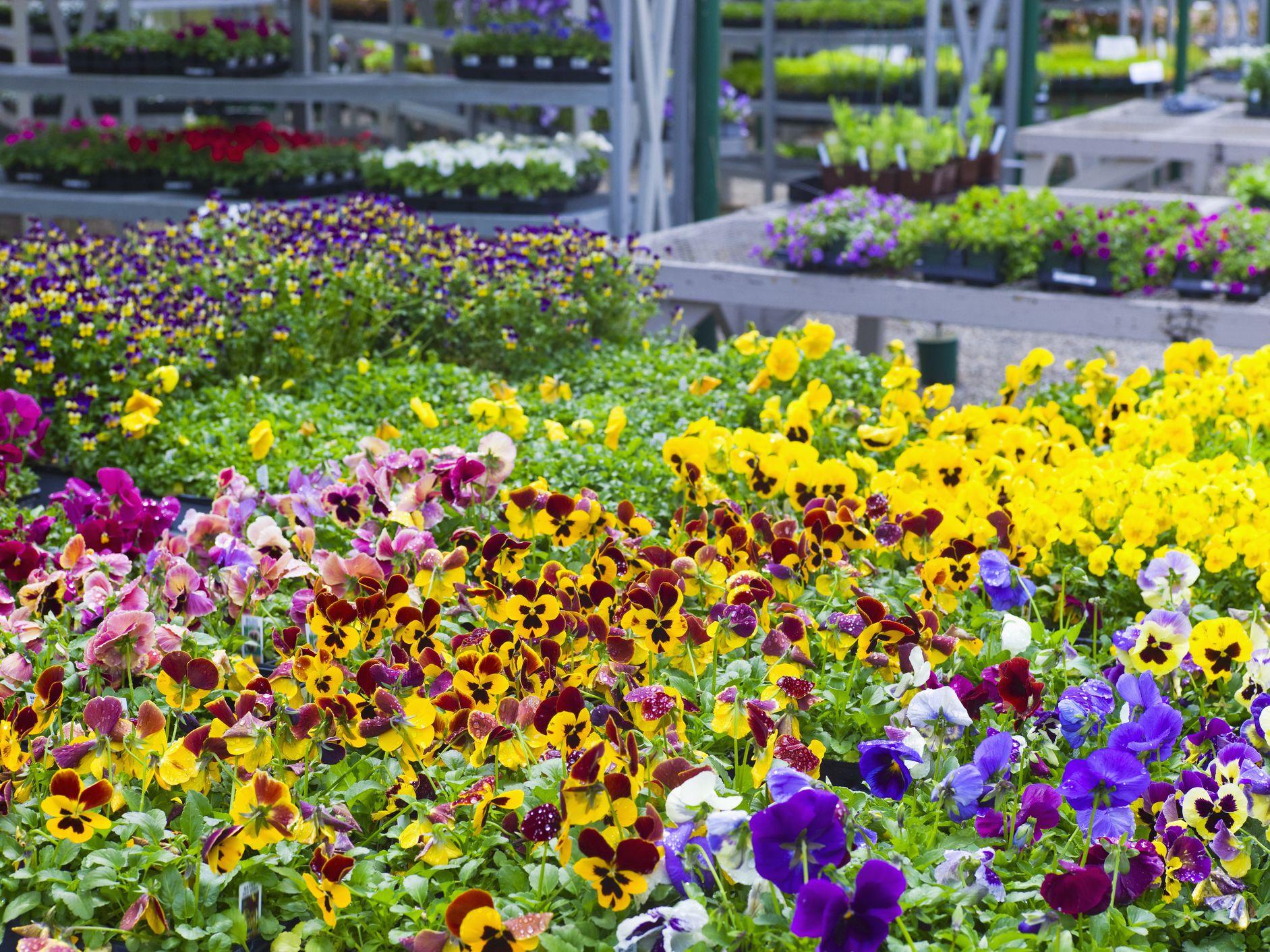 The Best San Go Nurseries And Garden Centers