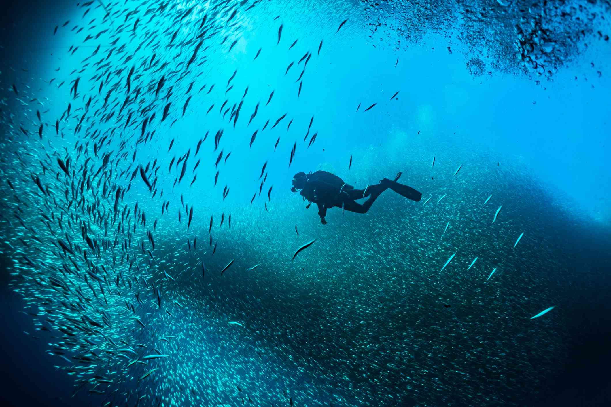 Scuba Diver Swimming In Between School Of Fish Undersea
