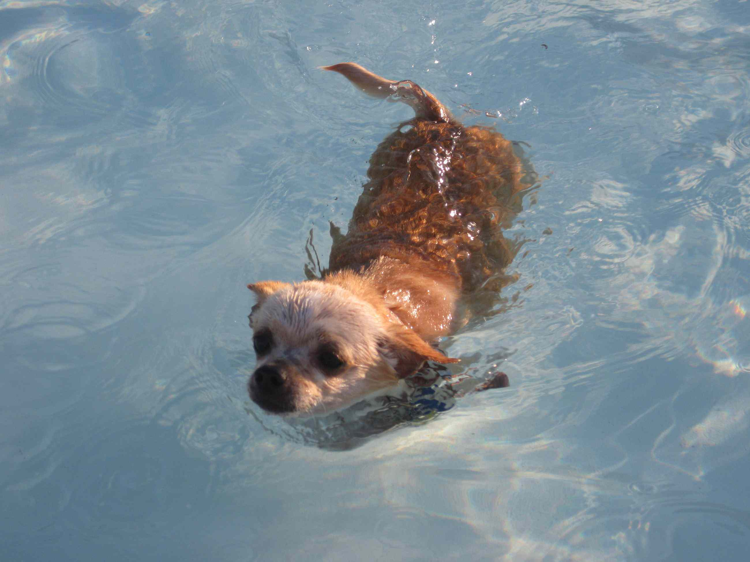 Midwest City's Doggie Paddle