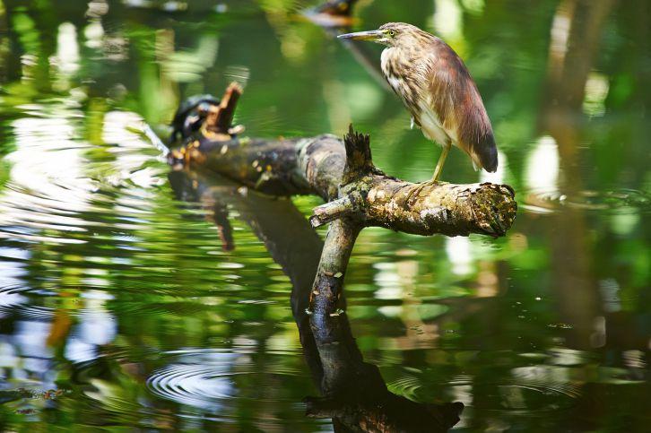 Kumarakom Bird Sanctuary,