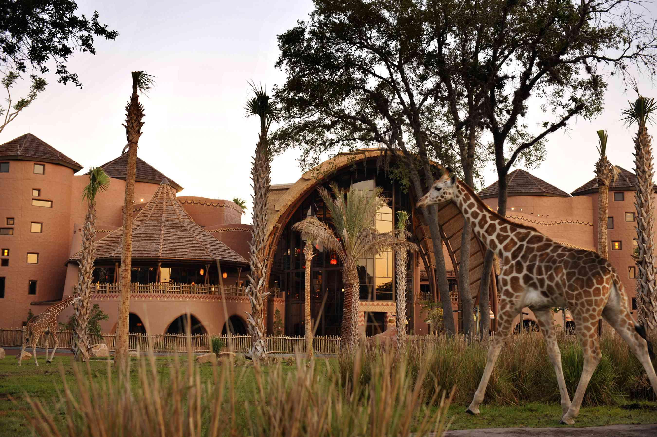 Kidani Village, a Disney Vacation Club property at Disney's Animal Kingdom Lodge in Walt Disney World