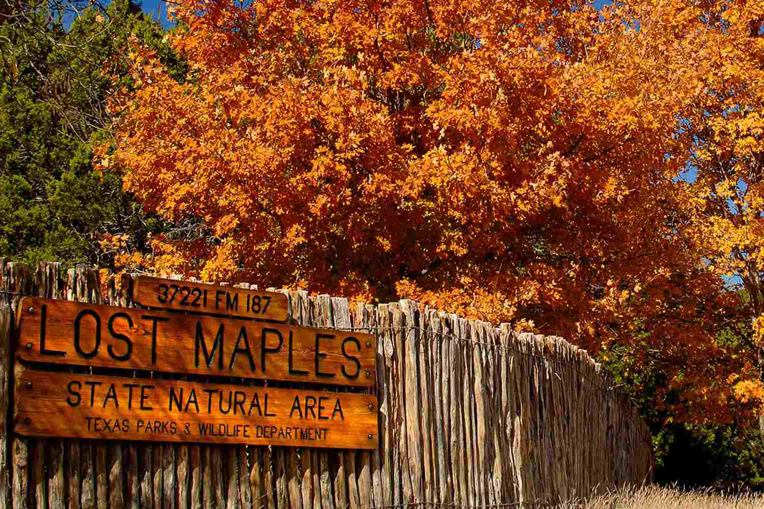 Lost Maples Texas