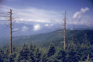View from Clingman's Dome in the Great Smoky Mountains, Tennessee, circa 1960. (Photo by Hulton Archive/Getty Images)