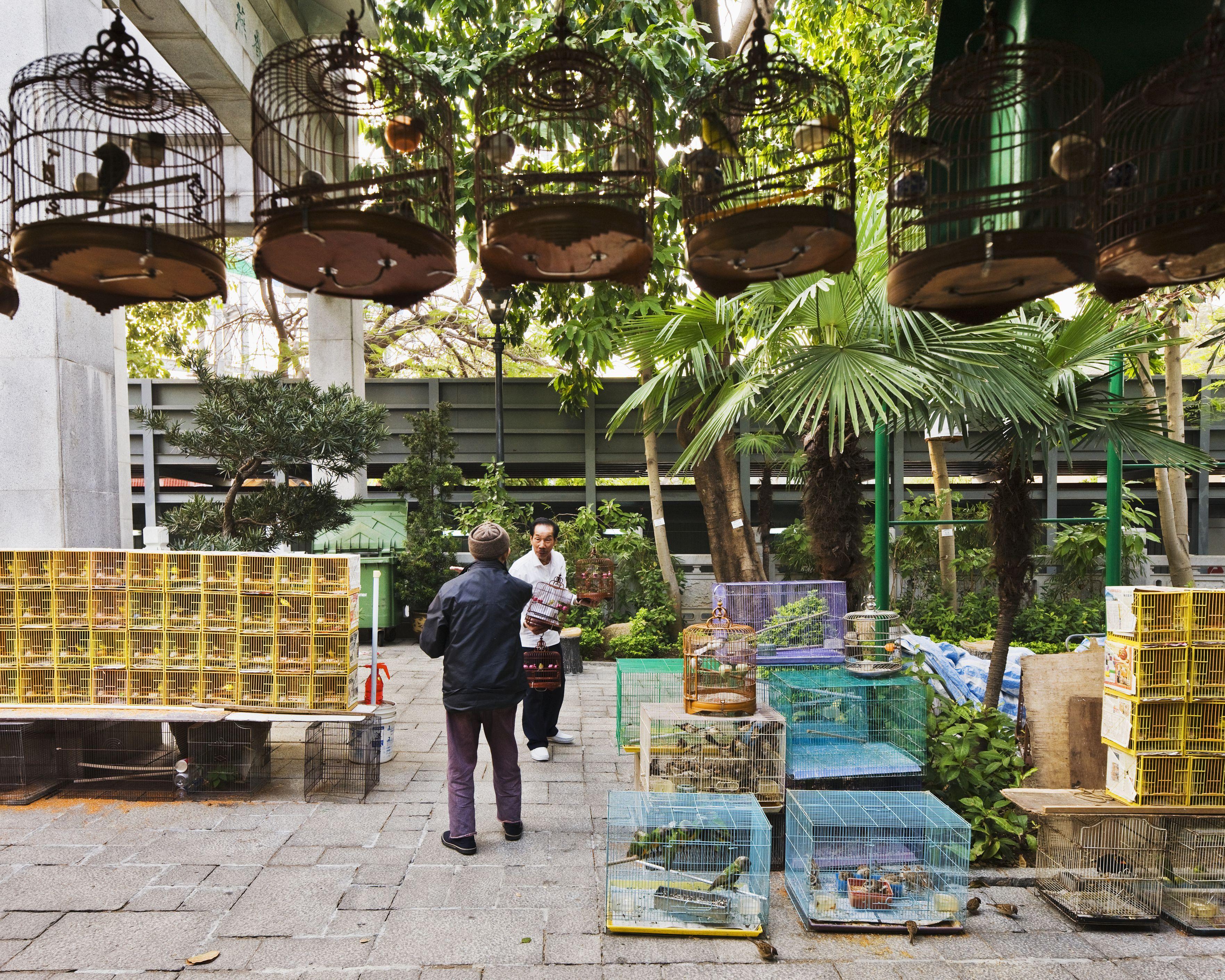 The bird market at Kowloon in Hong Kong