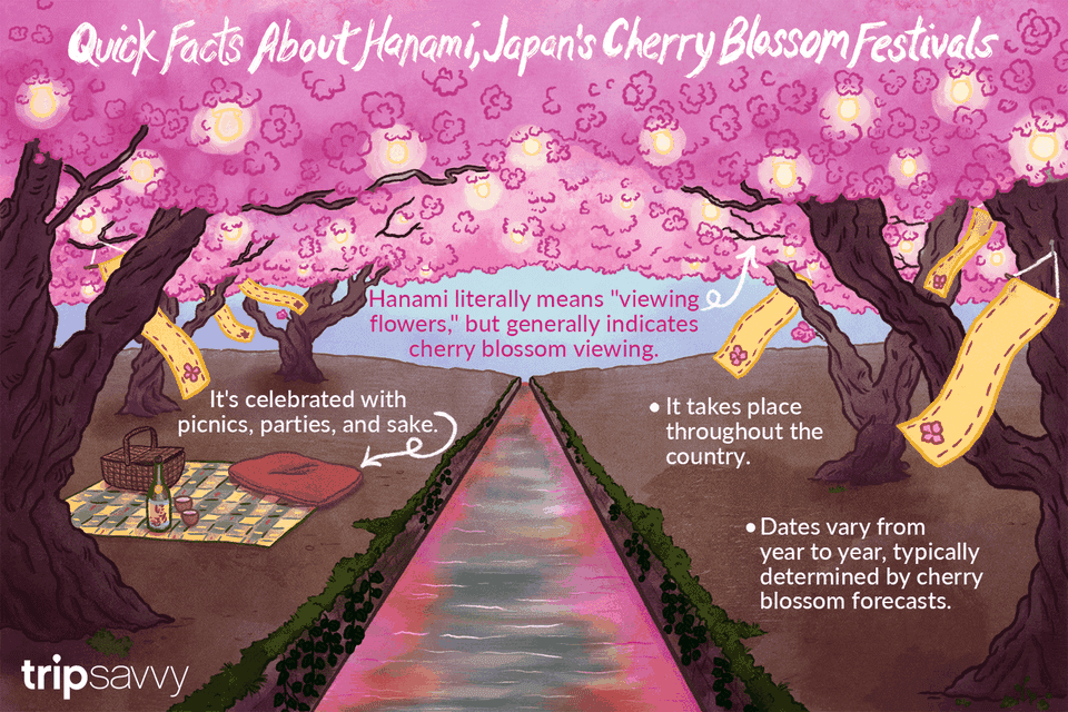 Japan's cherry blossoms festivals