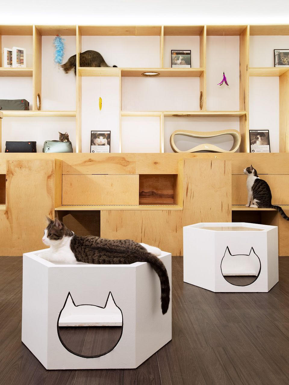 Cats sitting on cat-themed furniture and bookshelves at Meow Parlour