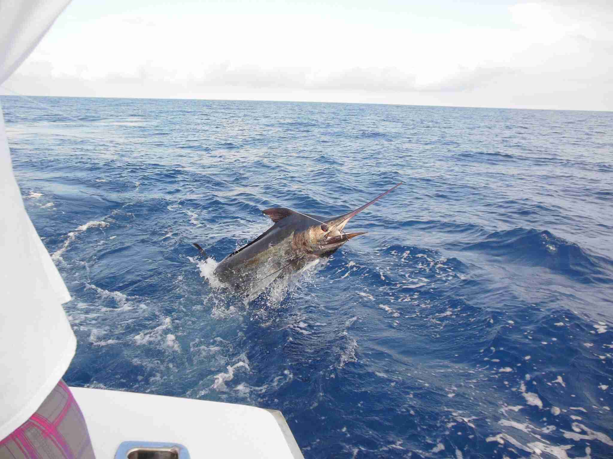 Trapped Billfish In Sea Against Sky