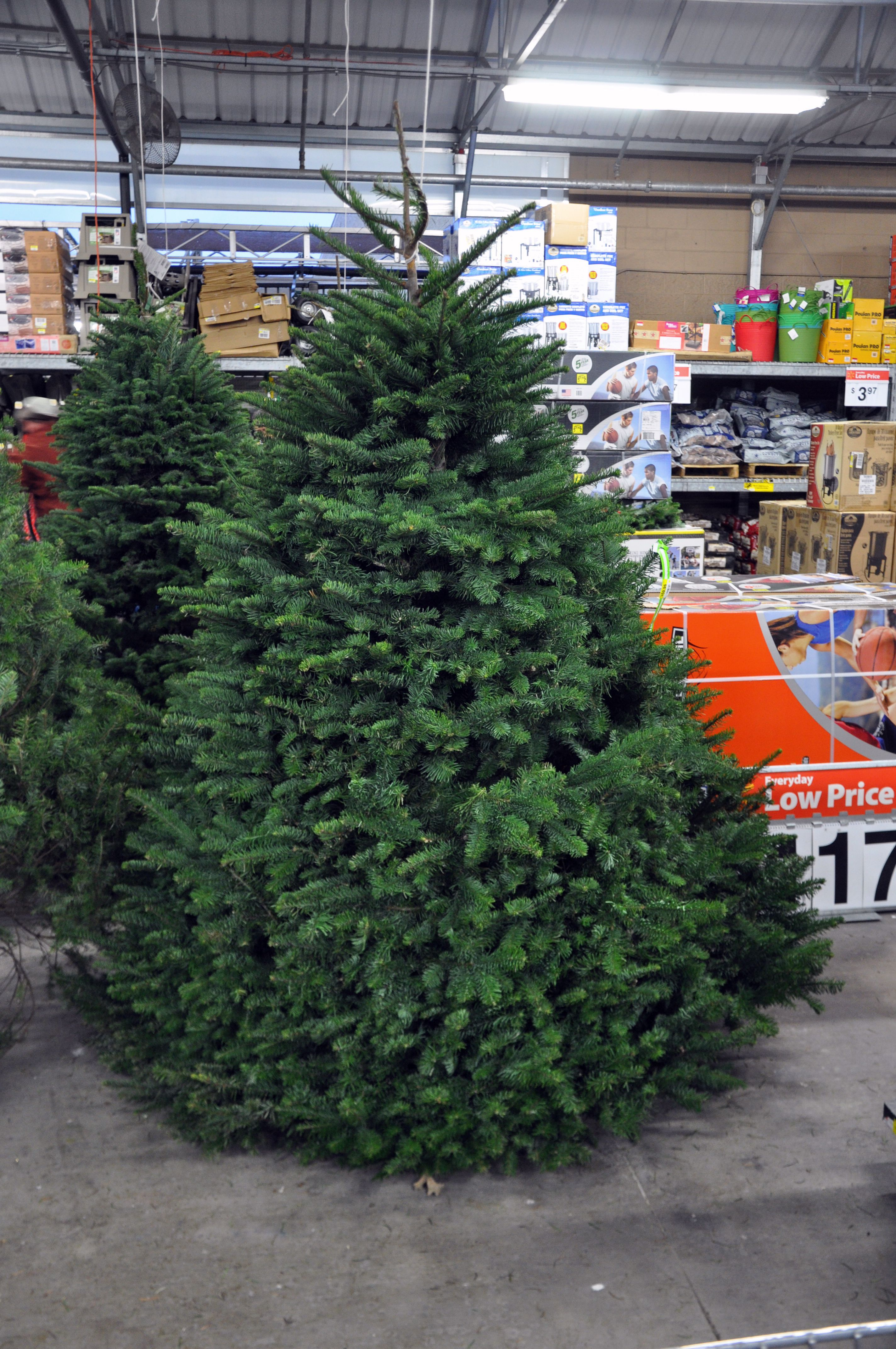 Where to Dispose of Your Christmas Tree in Dallas Fort Worth