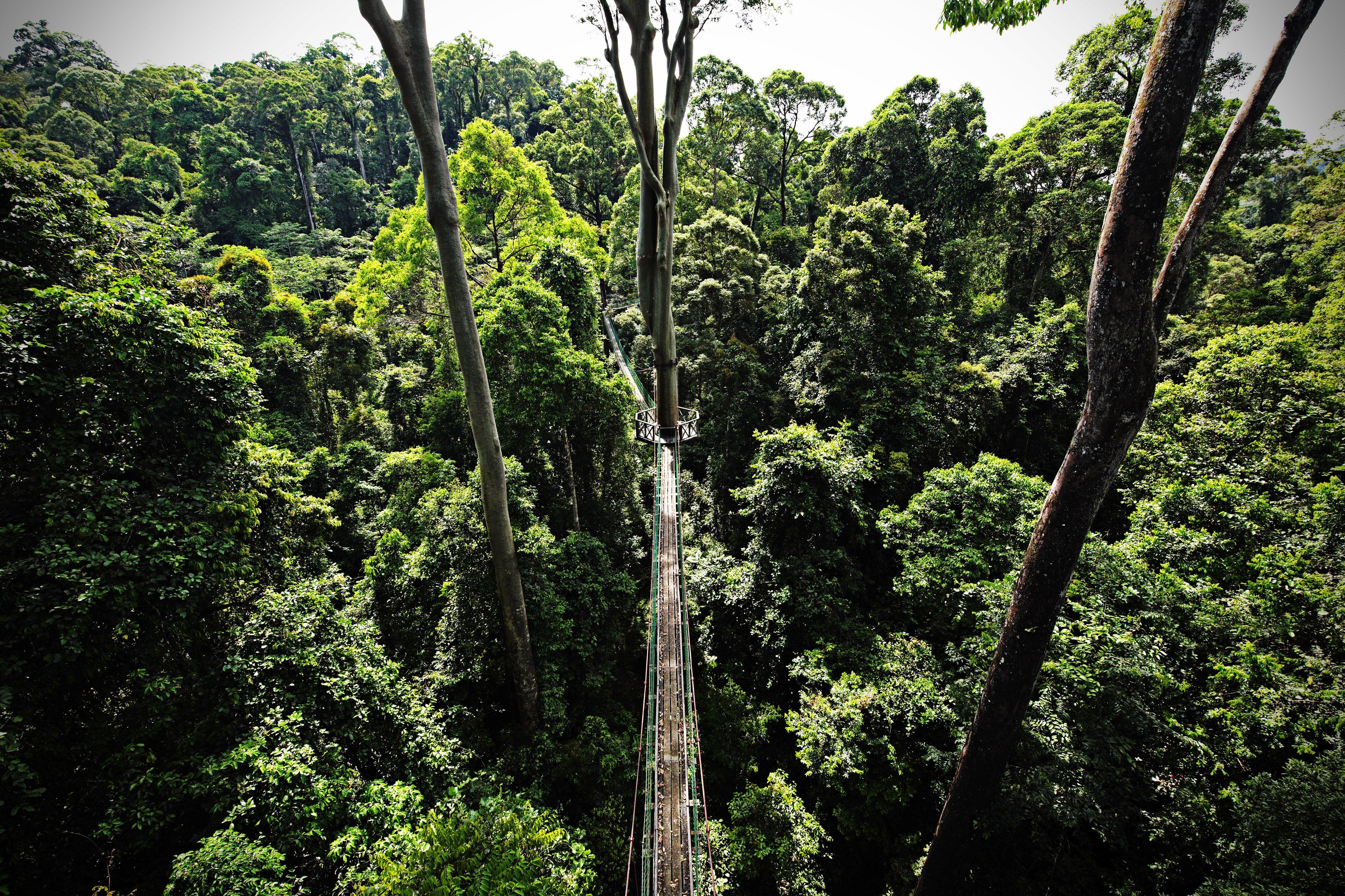 Selvas tropicales de Sabah, Borneo