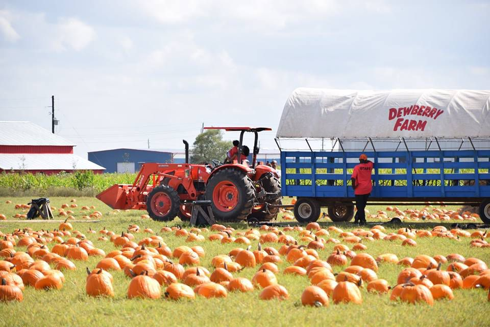 Dewberry Farm hay ride
