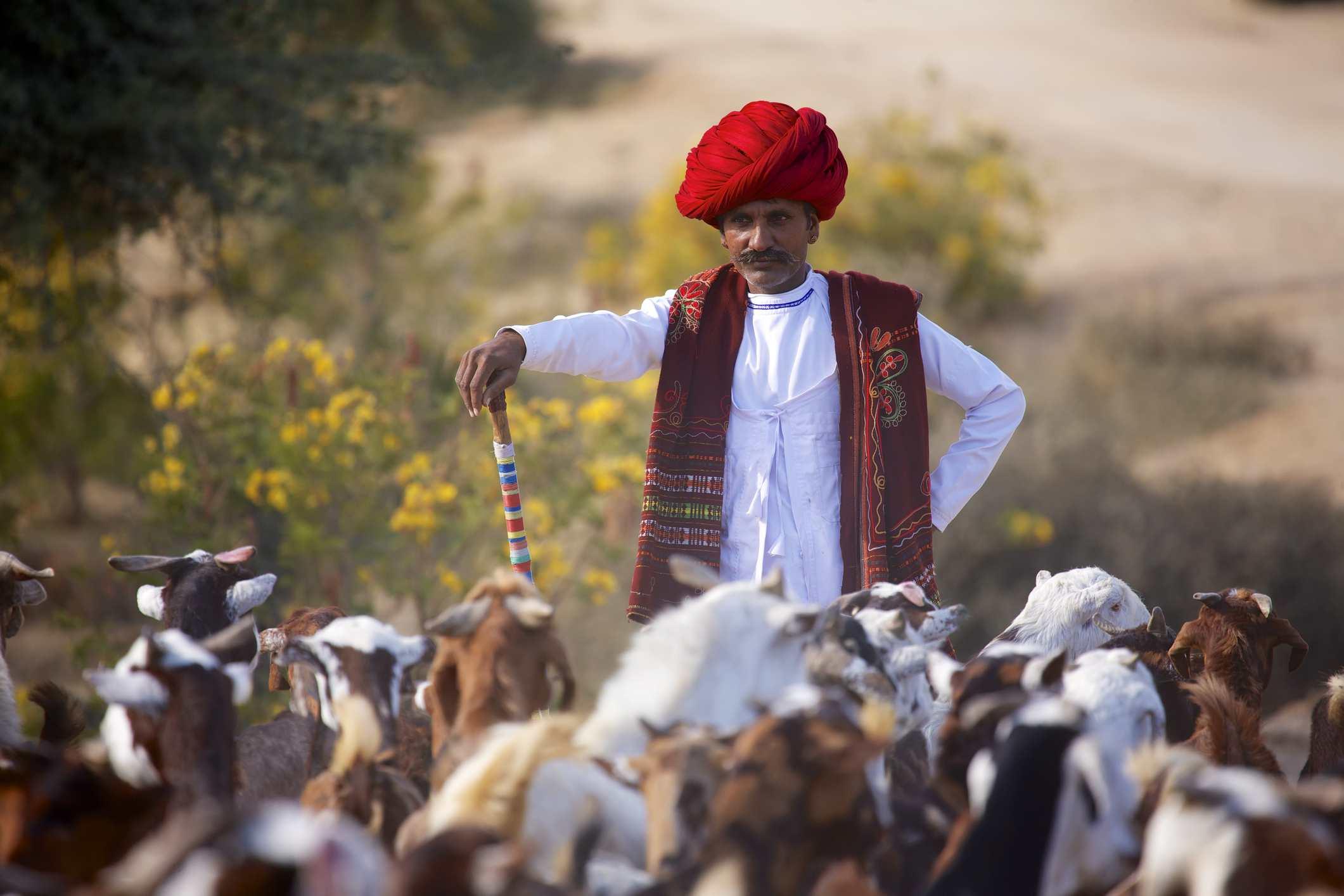 Nomadic shepherd in Rajasthan.
