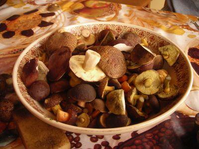 Mushroom Picking Poland