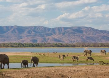Elephants and waterbuck on the Mana Pools floodplain, Zimbabwe