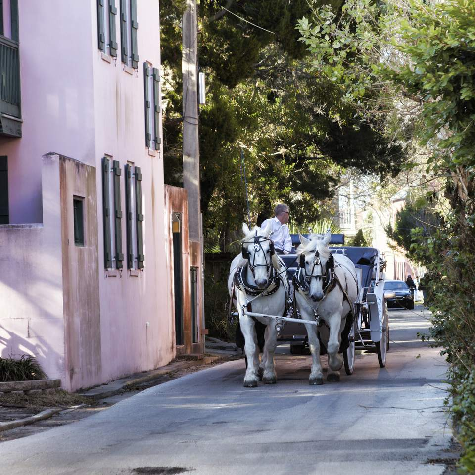 Carriage pulled by two white horses down narrow St. Augustine, Florida street.
