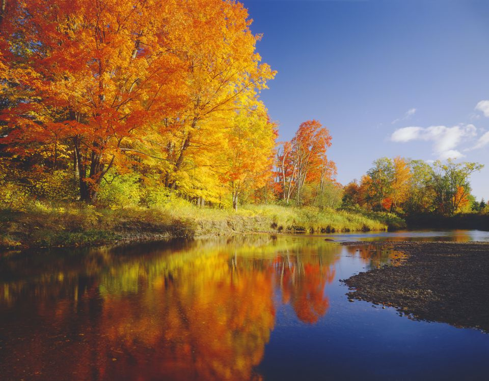 Autumn trees along riverbank in New England