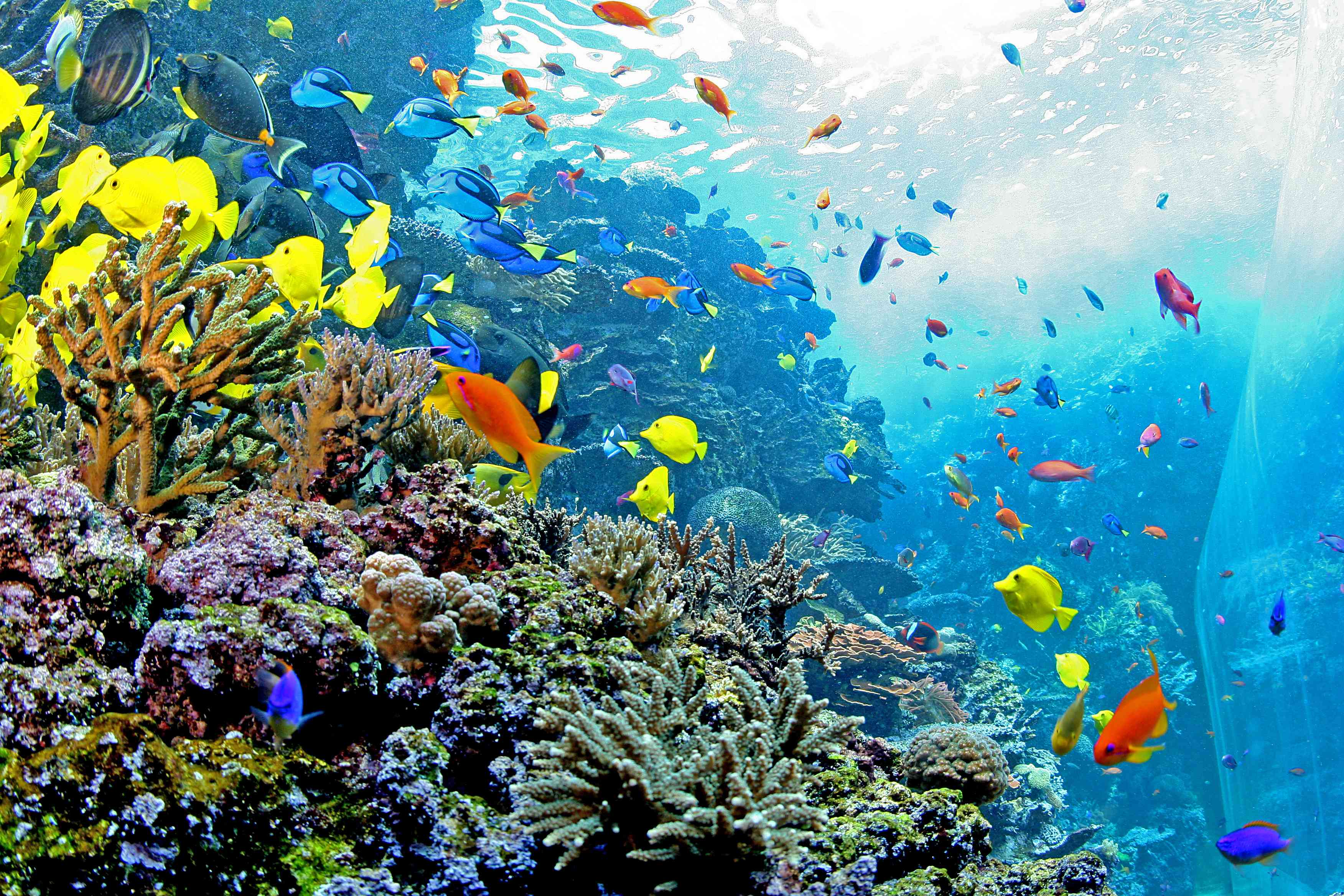 The Georgia Aquarium.jpg