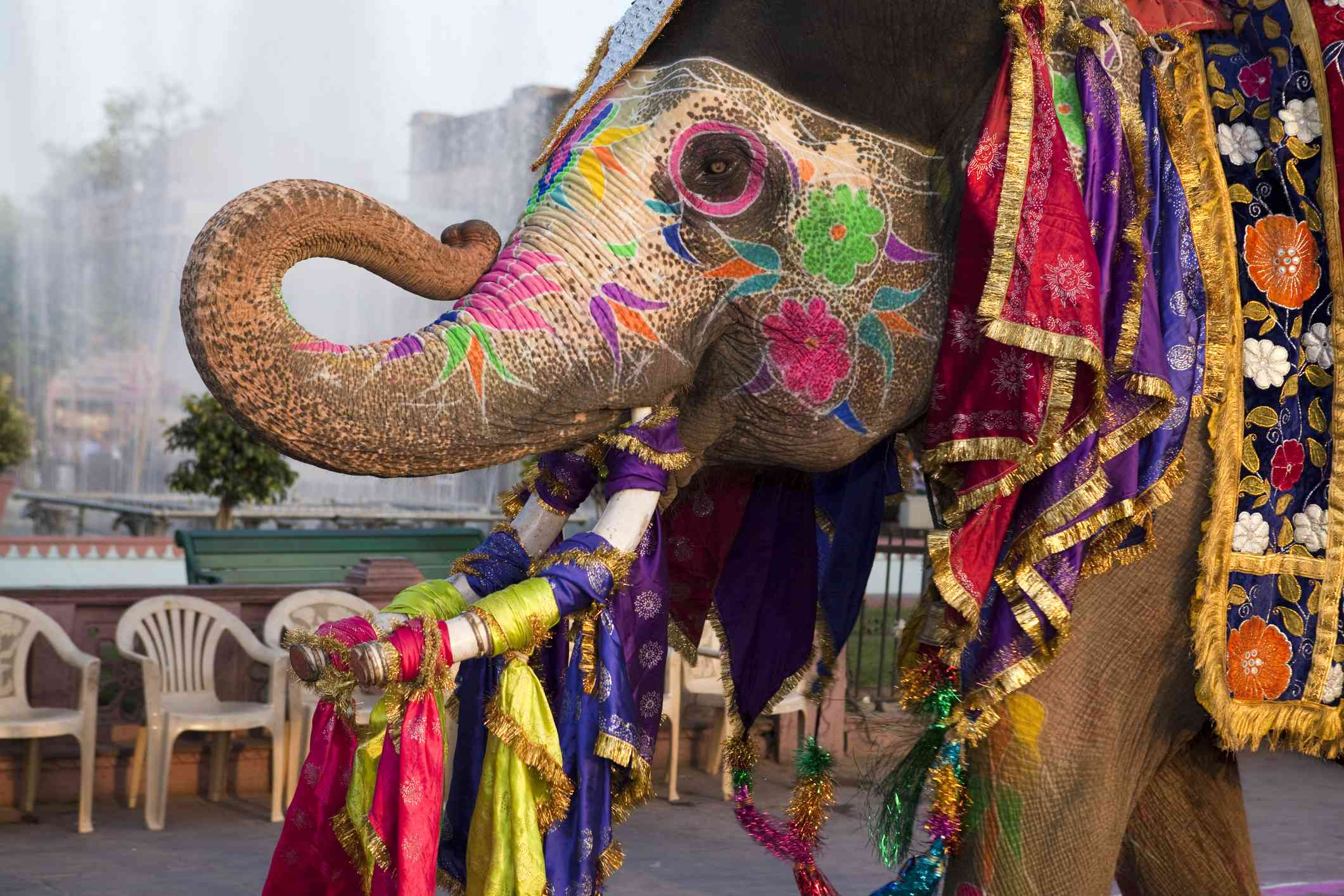 Gangaur elephant festival in Jaipur, India
