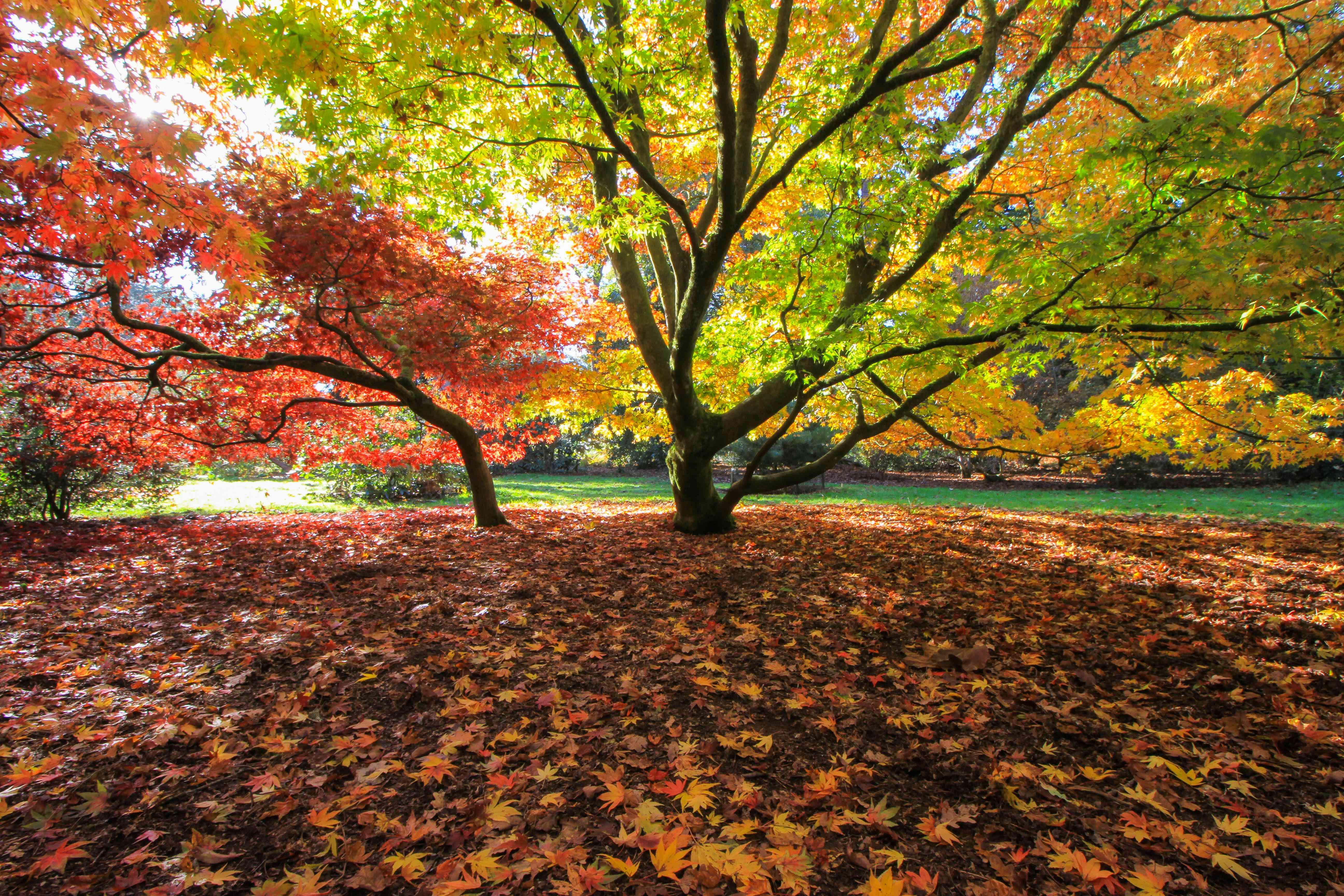 El arboreto donde los árboles pasan por el cambio de las hojas