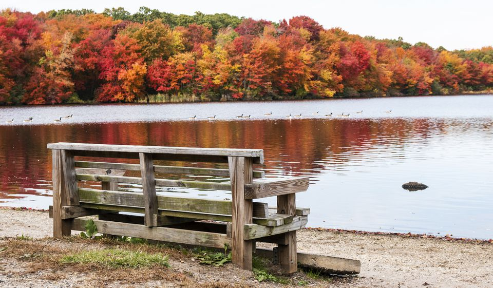 Fall foliage with a bench and water